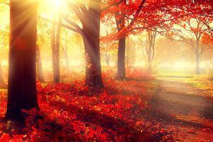 Autumn. Fall Scene. Beautiful Autumnal Park. Beauty Nature Scene. Autumn Trees and Leaves, Foggy Fo by Subbotina Anna