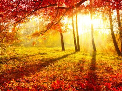 Autumn Trees and Leaves by Subbotina Anna
