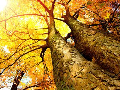 Autumn Trees.Fall by Subbotina Anna
