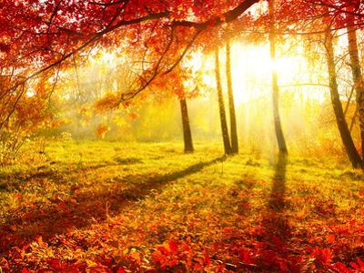 Autumnal Park. Autumn Trees and Leaves. Fall by Subbotina Anna