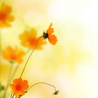 Beautiful Floral Border by Subbotina Anna