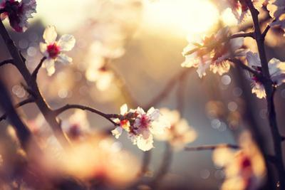 Beautiful Nature Scene with Blooming Tree and Sun Flare by Subbotina Anna