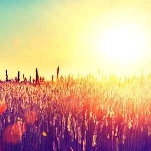 Field, Beautiful Nature Sunset Landscape by Subbotina Anna