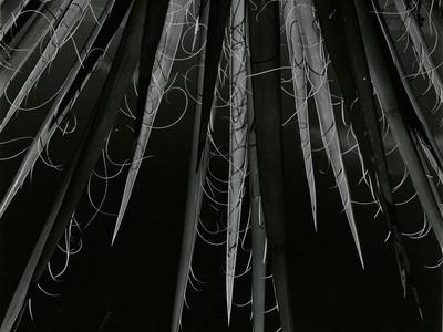 https://imgc.allpostersimages.com/img/posters/succulent-california-c-1985_u-L-Q1G6JF50.jpg?p=0