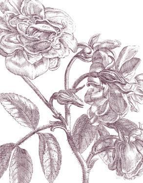 Belle Fleur I Plum Crop by Sue Schlabach