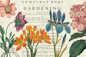 Botany by Sue Schlabach