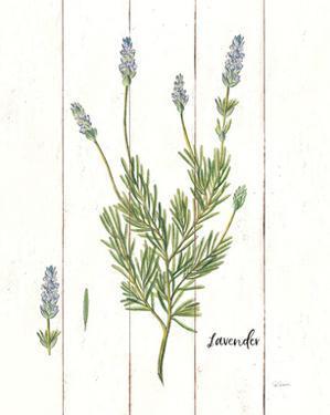 Cottage Herbs II by Sue Schlabach