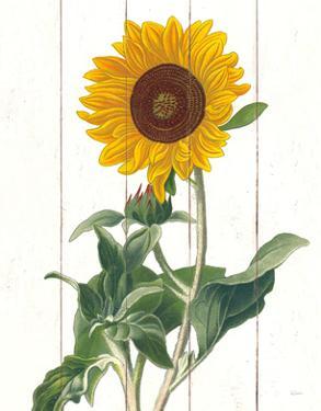 Cottage Sunflower by Sue Schlabach