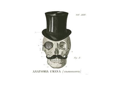 Dandy Bones I by Sue Schlabach