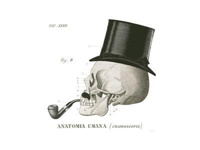 Dandy Bones II by Sue Schlabach