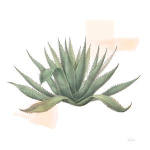 Desert Color Succulent I by Sue Schlabach