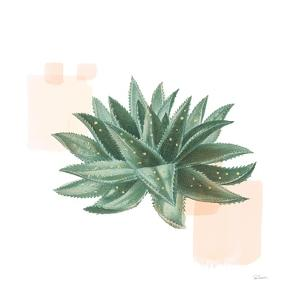 Desert Color Succulent II by Sue Schlabach