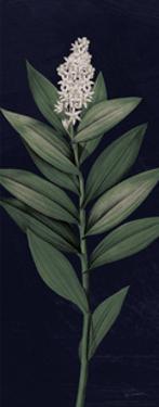 Dramatic Tropical III Light Crop by Sue Schlabach
