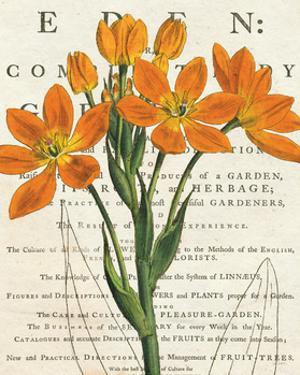 Euphorbia Botany by Sue Schlabach