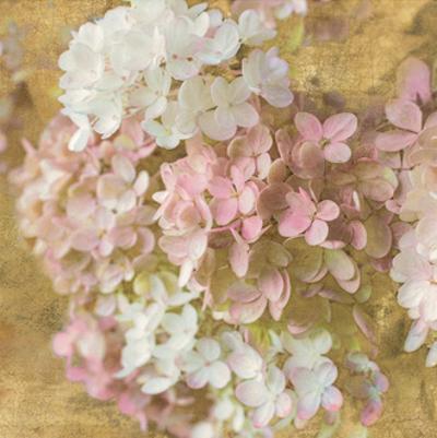 Gilded Hydrangea II by Sue Schlabach