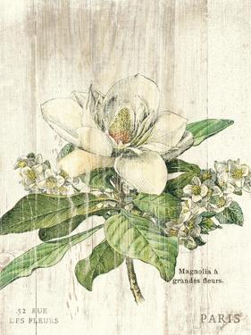 Magnolia de Printemps v2 by Sue Schlabach
