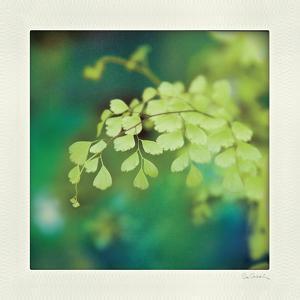 Natures Fern II by Sue Schlabach