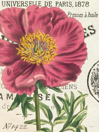 Peony Botany by Sue Schlabach