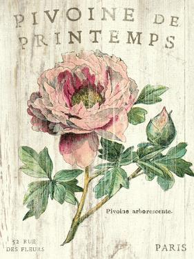 Pivoine de Printemps by Sue Schlabach