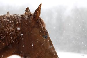 Snowy Caleb by Sue Schlabach