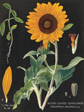 Sunflower Chart by Sue Schlabach