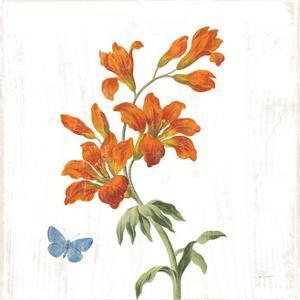 White Barn Flowers VII Sq by Sue Schlabach