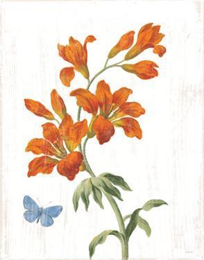 White Barn Flowers VII by Sue Schlabach