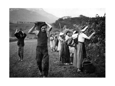 Grape Harvest in the Haut-Grésivaudan in Southern France, 1943 by Süddeutsche Zeitung Photo