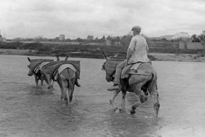 Man with Donkeys in Spain, 1934 by Süddeutsche Zeitung Photo