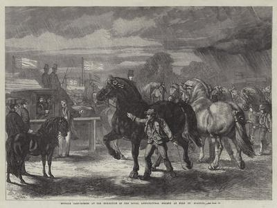 https://imgc.allpostersimages.com/img/posters/suffolk-cart-horses-at-the-exhibition-of-the-royal-agricultural-society-at-bury-st-edmunds_u-L-PUSM2L0.jpg?p=0