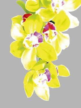 Neon Orchid II by Sukhanlee