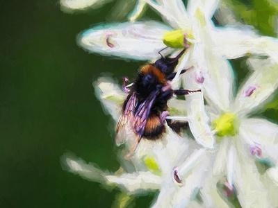 https://imgc.allpostersimages.com/img/posters/summer-bee-2018_u-L-Q1GTWWR0.jpg?artPerspective=n