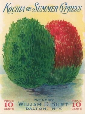 Summer Cypress Seed Packet