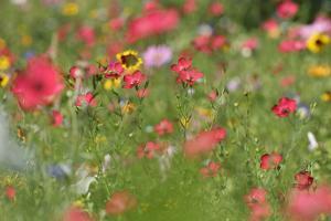 Summer Flower Mix Colourful Summer Flower Mix