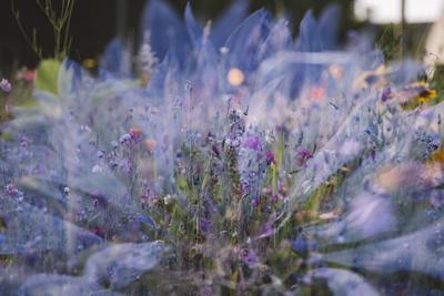 https://imgc.allpostersimages.com/img/posters/summer-flowers-meadows-in-bielefeld-on-the-roadsides-double-exposure_u-L-Q1EXOWD0.jpg?artPerspective=n