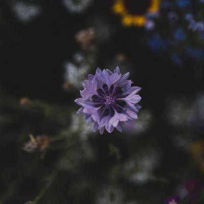 https://imgc.allpostersimages.com/img/posters/summer-flowers-meadows-on-the-roadsides-in-bielefeld_u-L-Q1EXN6R0.jpg?artPerspective=n