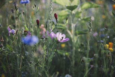 https://imgc.allpostersimages.com/img/posters/summer-flowers-meadows-on-the-roadsides-in-bielefeld_u-L-Q1EXNQ70.jpg?artPerspective=n