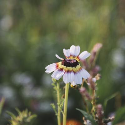https://imgc.allpostersimages.com/img/posters/summer-flowers-meadows-on-the-roadsides-in-bielefeld_u-L-Q1EXNTS0.jpg?artPerspective=n