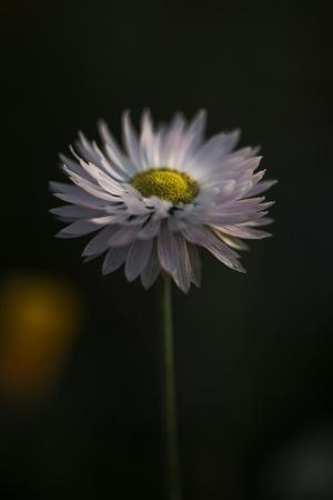 https://imgc.allpostersimages.com/img/posters/summer-flowers-meadows-on-the-roadsides-in-bielefeld_u-L-Q1EXOBN0.jpg?artPerspective=n
