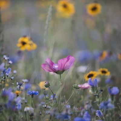 https://imgc.allpostersimages.com/img/posters/summer-flowers-meadows-on-the-roadsides-of-bielefeld_u-L-Q1EXPIL0.jpg?artPerspective=n
