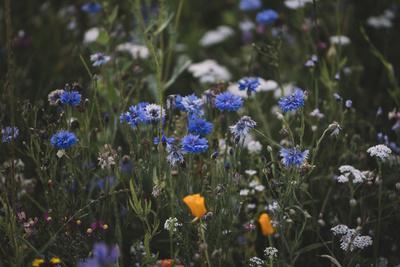 https://imgc.allpostersimages.com/img/posters/summer-flowers-meadows-on-the-roadsides-of-bielefeld_u-L-Q1EXPLH0.jpg?artPerspective=n