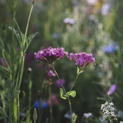 https://imgc.allpostersimages.com/img/posters/summer-flowers-meadows-on-the-roadsides-of-bielefeld_u-L-Q1EXQ0T0.jpg?artPerspective=n