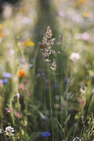 https://imgc.allpostersimages.com/img/posters/summer-flowers-meadows-on-the-roadsides-of-bielefeld_u-L-Q1EXQA10.jpg?artPerspective=n