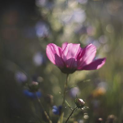 https://imgc.allpostersimages.com/img/posters/summer-flowers-meadows-on-the-roadsides-of-bielefeld_u-L-Q1EXQD40.jpg?artPerspective=n
