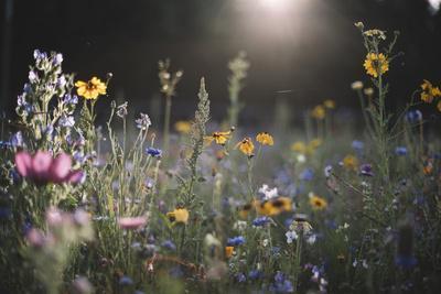 https://imgc.allpostersimages.com/img/posters/summer-flowers-meadows-on-the-roadsides-of-bielefeld_u-L-Q1EXQGP0.jpg?artPerspective=n