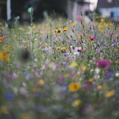 https://imgc.allpostersimages.com/img/posters/summer-flowers-meadows-on-the-roadsides-of-bielefeld_u-L-Q1EXQOQ0.jpg?artPerspective=n