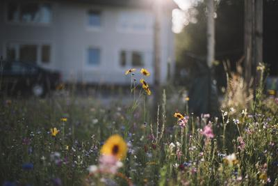 https://imgc.allpostersimages.com/img/posters/summer-flowers-meadows-on-the-roadsides-of-bielefeld_u-L-Q1EXQTQ0.jpg?artPerspective=n