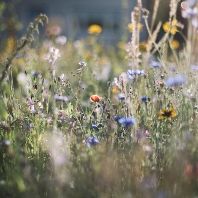 https://imgc.allpostersimages.com/img/posters/summer-flowers-meadows-on-the-roadsides-of-bielefeld_u-L-Q1EXR1B0.jpg?artPerspective=n