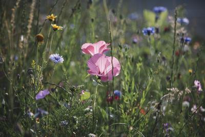 https://imgc.allpostersimages.com/img/posters/summer-flowers-meadows-on-the-roadsides-of-bielefeld_u-L-Q1EXR9J0.jpg?artPerspective=n