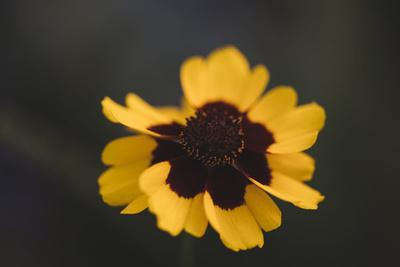 https://imgc.allpostersimages.com/img/posters/summer-flowers-on-the-roadsides-of-bielefeld_u-L-Q1EXQOI0.jpg?artPerspective=n